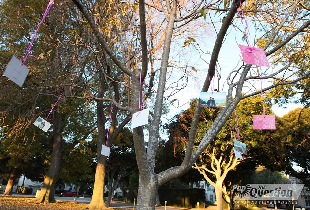 How To Propose At A Park Memory Tree Beverly Hills Proposal