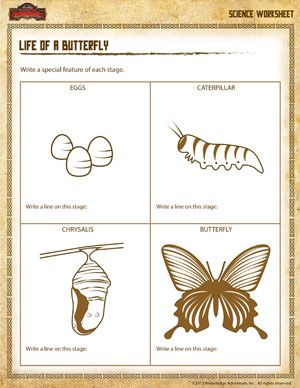 life cycle of a butterfly printable 3rd grade science worksheet school ideas butterfly. Black Bedroom Furniture Sets. Home Design Ideas