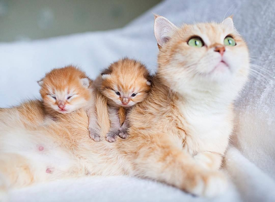 Thursday s Most Viral A Mama Cat With Her Two Babies