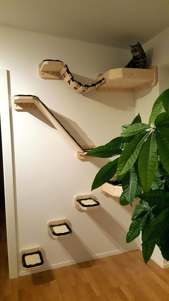 Photo of Cat Tree DIY Build Cat Toys #cats – gatos