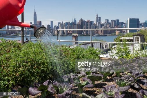 ストックフォト : Urban rooftop farming in Brooklyn, New York