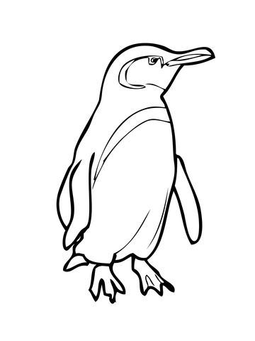 Galápagospinguin Ausmalbild Free Printable Coloring