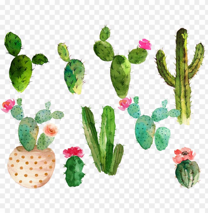 Succulent Wallpaper Drawing 63 Ideas Cactus Flower Painting Succulents Wallpaper Cactus Illustration