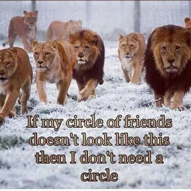 A Lion Never Loses Sleep Over The Opinions Of Sheep If My Circle