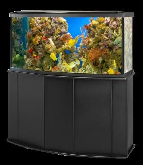 Alphabetical Aquarium Fish Tank Aquarium Fish Fish Tank