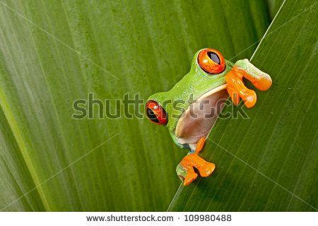 Zip Lining Tree Frog