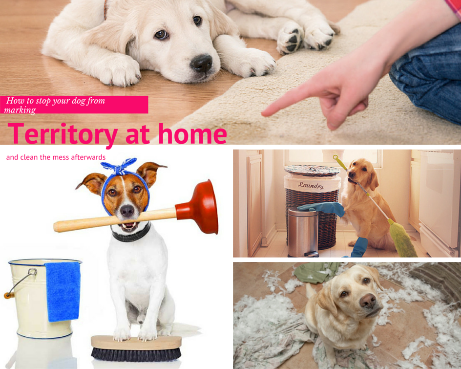 How To Stop Your Dog From Marking Territory At Home And Clean The Mess Afterwards Dog Marking Territory Your Dog Dog Smells