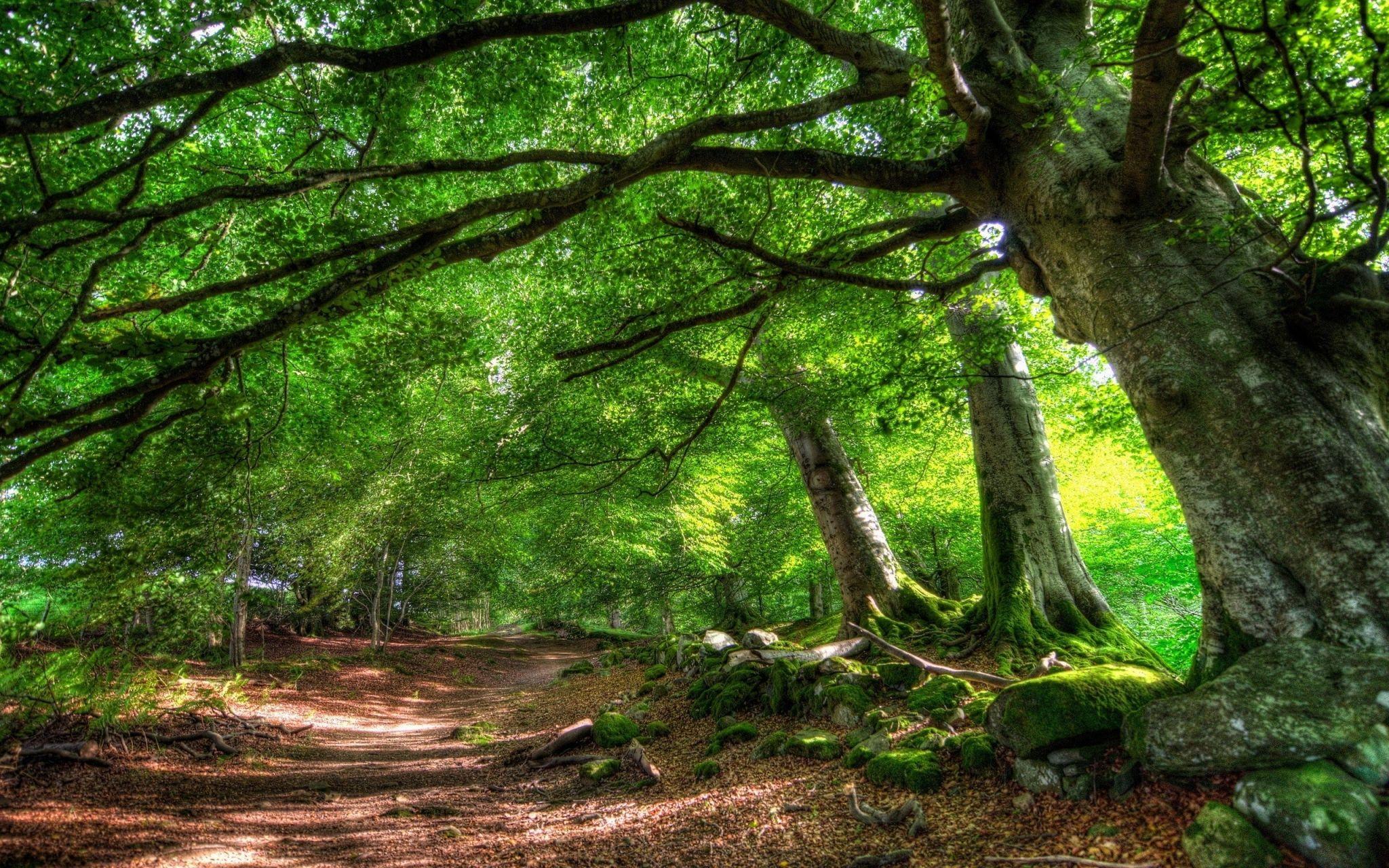 High Resolution Forest Desktop Wallpaper