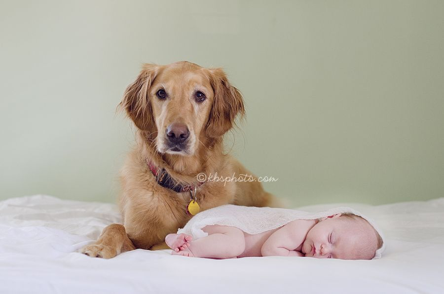 Baby And Dog 3 3 3 Kerry B Smith Photography Williamsburg And