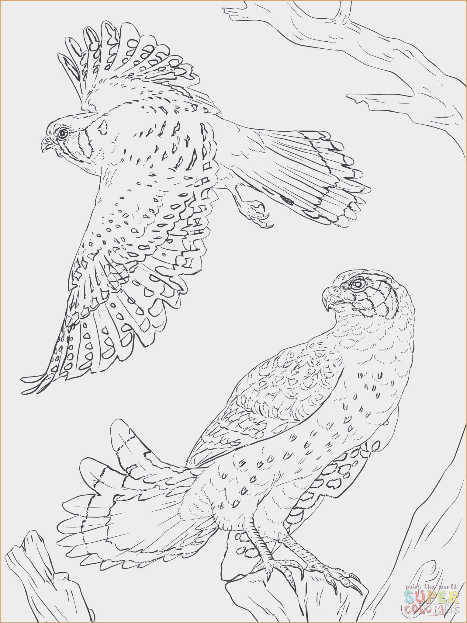 Spring Coloring Pages For Toddlers In 2020 Horse Coloring Pages