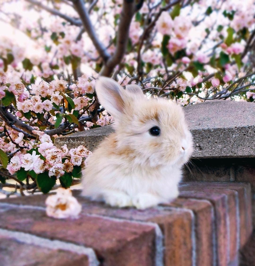 Pin by Sandy Burke on Farm Animals Rabbit, Fluffy rabbit