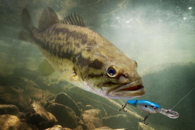 17 best ideas about best lures for bass on pinterest | bass, Soft Baits