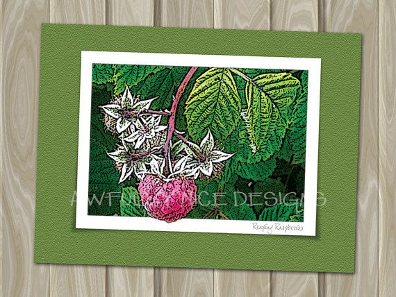 Reaping Raspberries  - blank note card by Awfully Nice Designs.