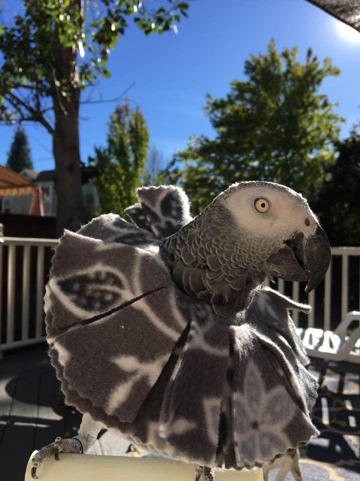 Get your plucking grey a soft fleece bird collar to