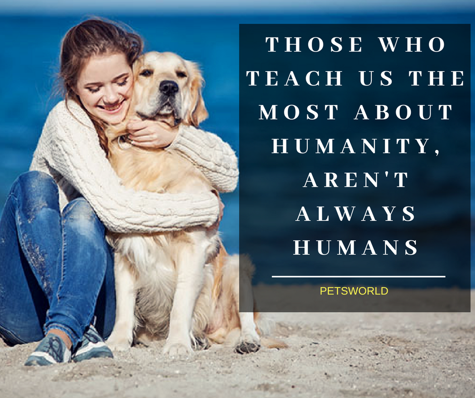 Those Who Teach Us The Most About Humanity Aren T Always Humans 3 3 Petsworld Dogs Dogsofinstagram Dogtraining Dogmom Dog Cute Dog Quotes Puppy Quotes Dog Love