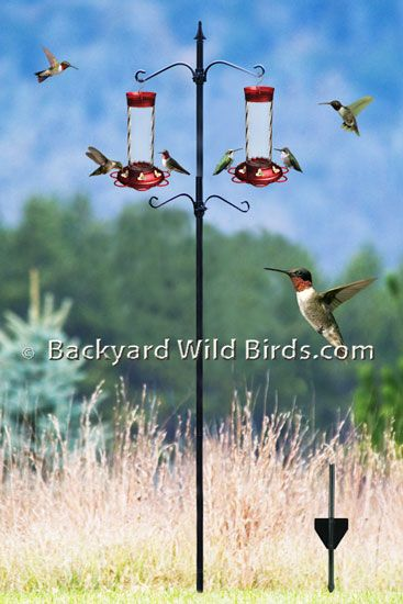 Hummingbird Feeder Station Pole At Backyard Wild Birds | Humming Birds |  Pinterest | Hummingbird, Backyard And Bird Feeder