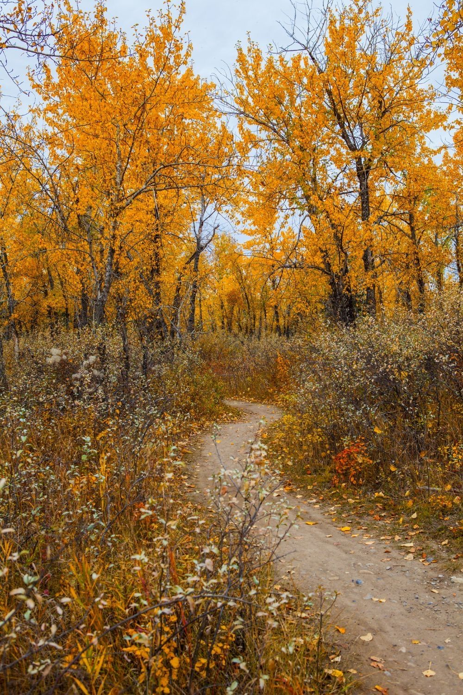 Autumn Trail In 2020 Fall Landscape Photography Autumn Scenery Autumn Landscape