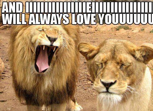 Lion Meme