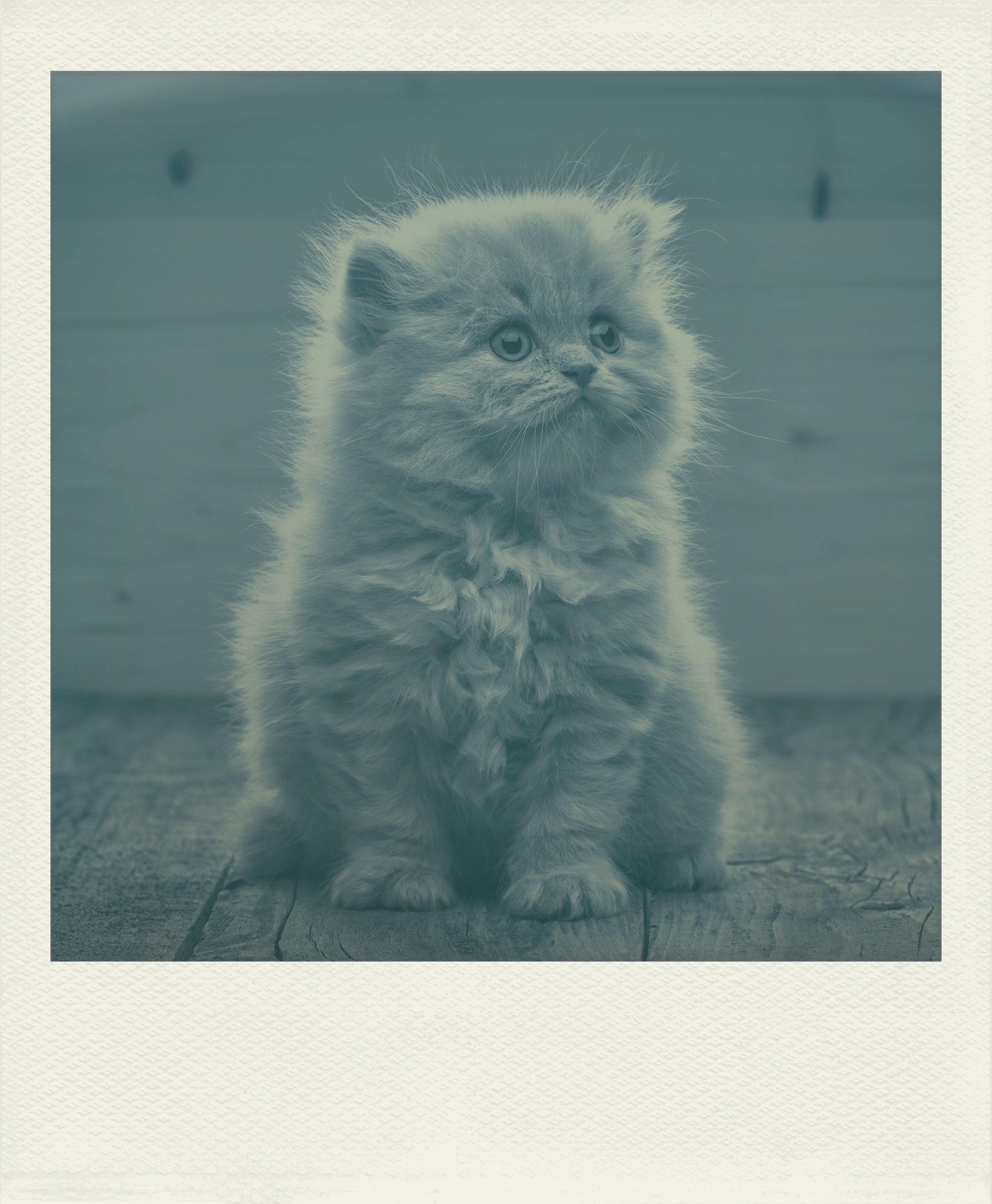InstaLab app Baby Cat Baby cats, Pets, Instant photos