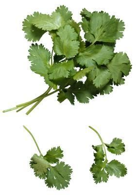 How to dry cilantro without a dehydrator