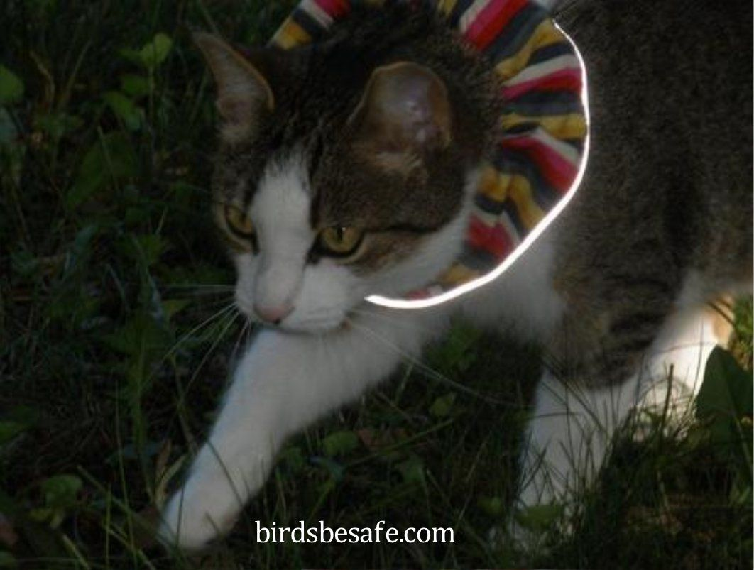 nouvelles variétés commercialisable recherche d'authentique collier birdsbesafe nuit | Malin ! | Chat, Collier et Clochette