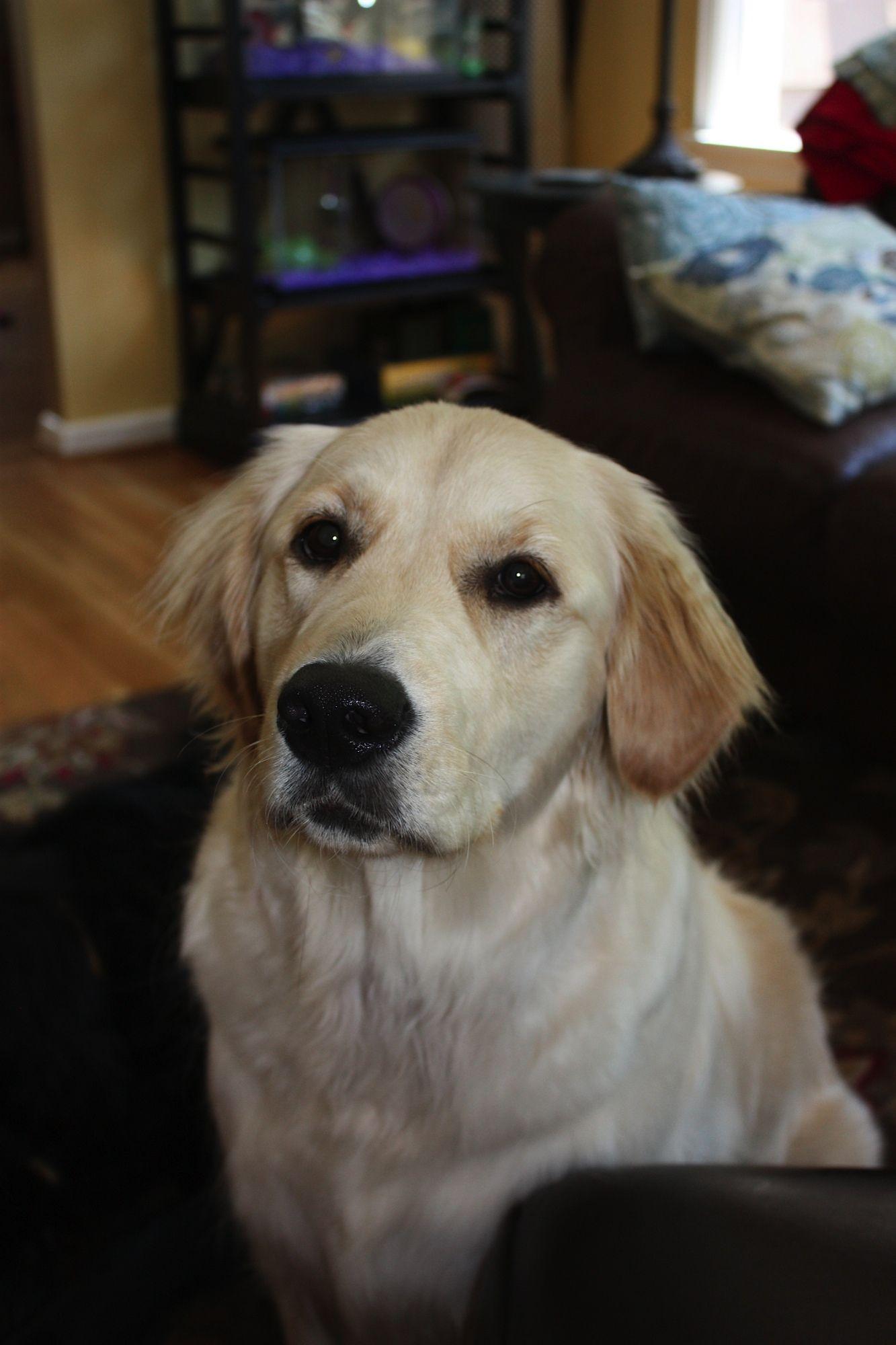 Does Paw Print Genetics Do Ichthyosis Testing Dog Breeds