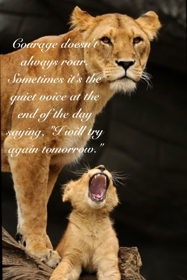 Lioness Quotes Women Courage | Lioness, cubs, Animals ...