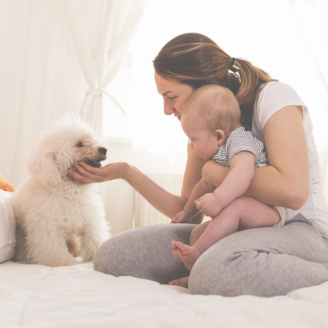 Having a pet could make your baby healthier babies