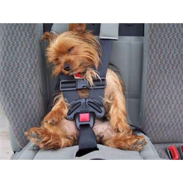 Sleeping Dog In The Car Sleeping Dog Dogs Funny Animals