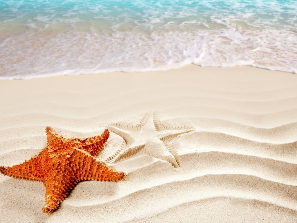 Orange Sea Star HD Desktop Wallpaper