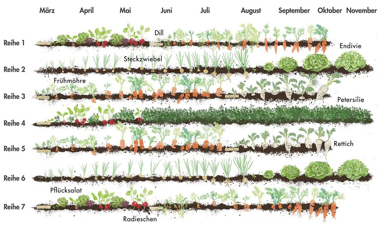 Beet 2 Gemuse Mit Mittlerem Nahrstoffbedarf Pflanzabstand Steckzwiebel 5 Cm Endivie 30 Cm Reihenabstand Je Gemuse Pflanzen Selbstversorger Garten Pflanzen