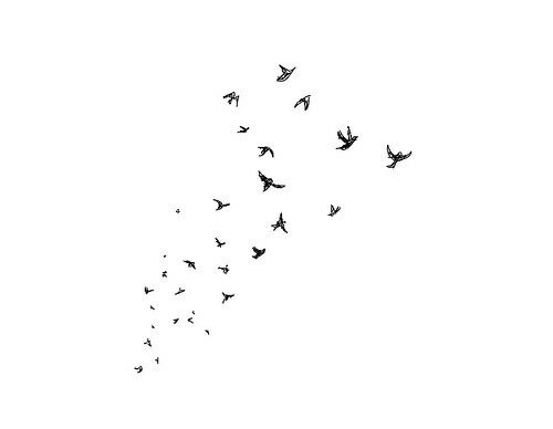 Bird Fly And Overlay Image White Aesthetic Black And White Aesthetic Black And White