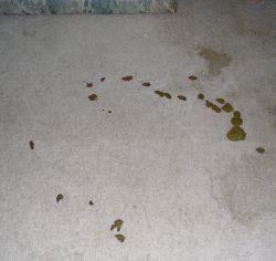 Homemade Pet Odor Removal Recipe Pet Odors Carpet Odors