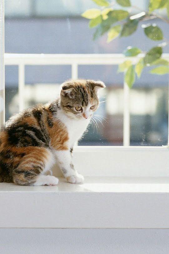 Calico Kitten Enjoying Some Fresh Air.