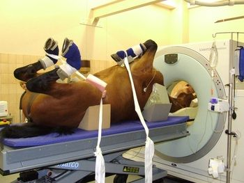 How Much Does A Cat Scan For A Dog Cost