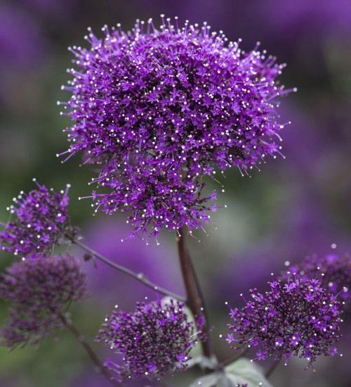 Purpletugboat