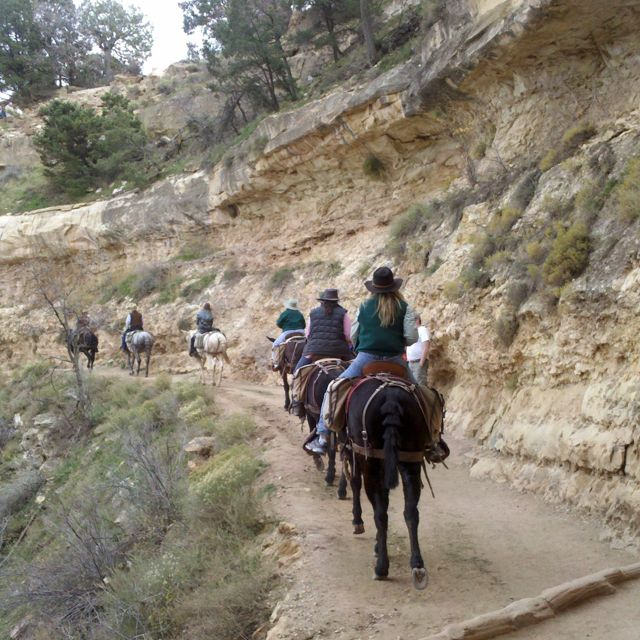 Mule ride to the bottom of the Grand Canyon