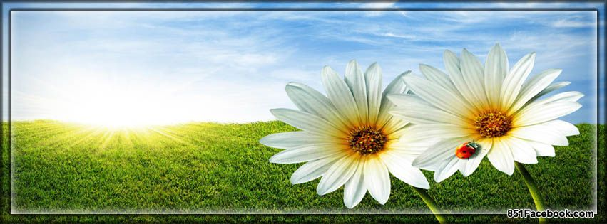 Spring Flowers Facebook Covers | Spring Flowers Facebook Cover ...