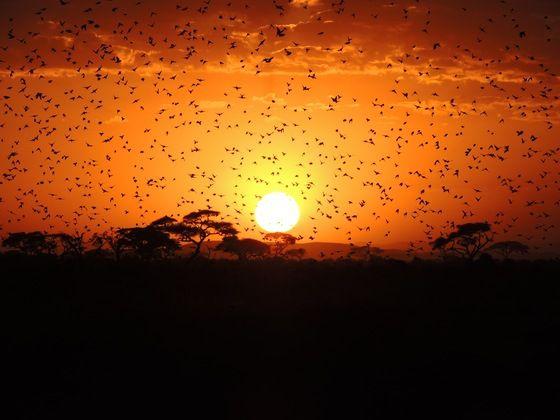 A domani, vi salutiamo con un tramonto alle falde del Kilimangiaro! #twitpic di Silvia.87 :)