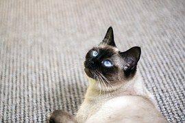 Mačka 371cb40e2bd