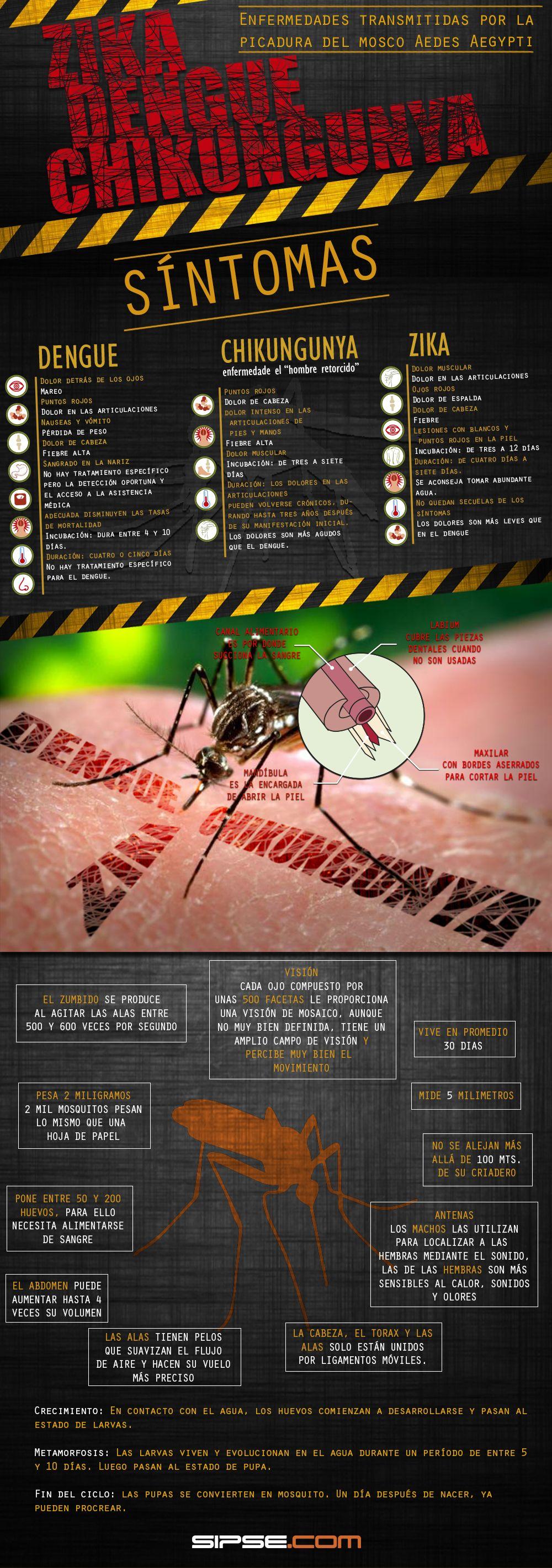 Infografía Conoce las enfermedades y síntomas transmitidas por el mosquito Aedes Aegypti
