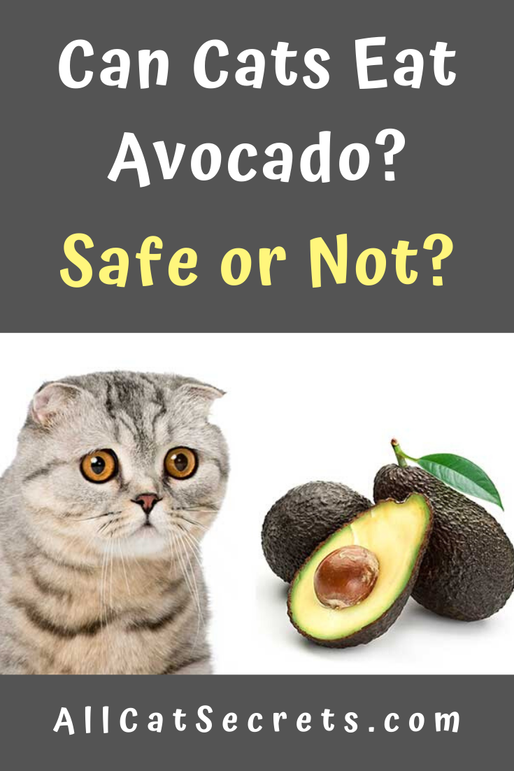 Can Cats Eat Avocado Reddit 2020 Pets News And Review
