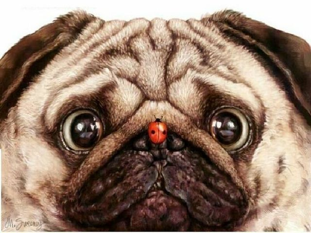 How Lucky Are You Pugs Cute Pugs Funny Animals
