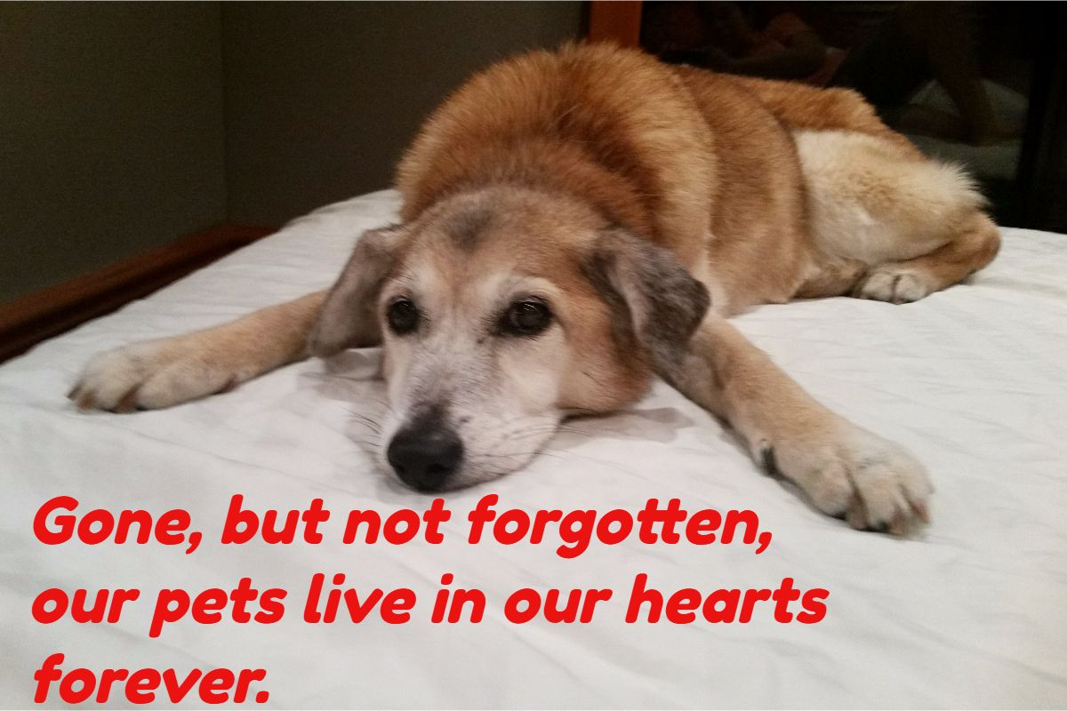 Pin by Sonia Frontera Author on Dog Rescue Rescue dogs