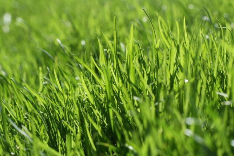 Get the Landscape of your Dreams! 10 Garden and Lawn Tips for the New Homeowner