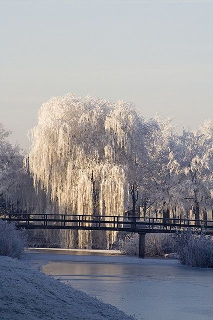 Snow Ice Winter Pinned By Western Sage And Kb Honey Aka Kidd Bros Willow Tree Winter Scenery Winter Pictures Winter Photography