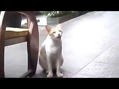 Unduh 65+  Gambar Kucing Ngantuk Lucu Paling Imut HD