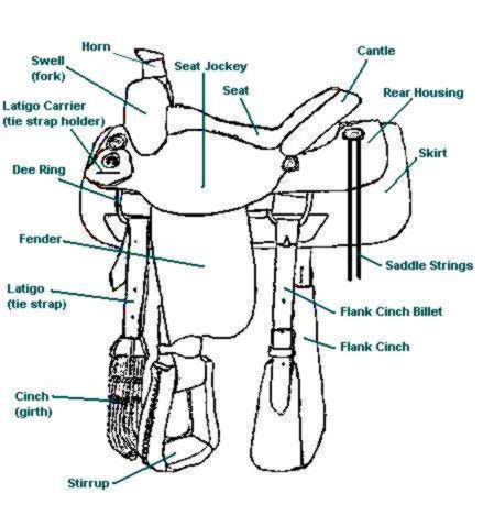 Parts of a Saddle, Saddle Part Names | Pre-k and School ...