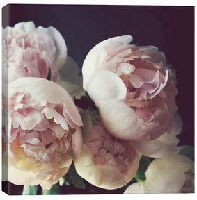 Peony Three by Lupen Grainne (Canvas)