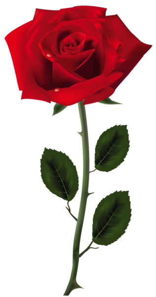 Pin By Eynasoo On Clipart Red Rose Png Red Roses Flower Images
